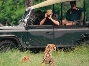 Op rondreis in Zuid-Afrika: stel zelf je vakantie samen en ontdek de prachtige natuur, de zeldzame dieren en de rijke cultuur